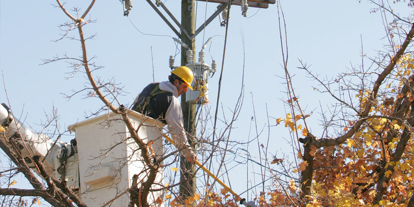 Line Clearance Arborist Training